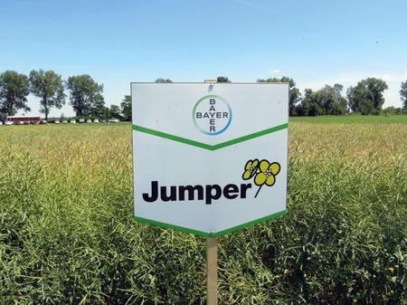 A Jumper rendkívül magas omega 3  és omega 6 zsírsav tartalmú repce