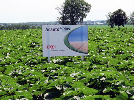 Acanto® Plus-szal kezelt, egészséges napraforgó tábla Dalamandon