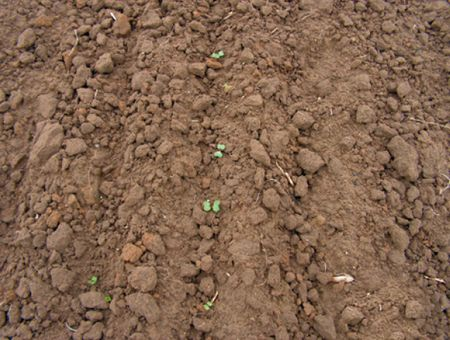 Sem a talajállapot, sem a fejlettség nem optimális!