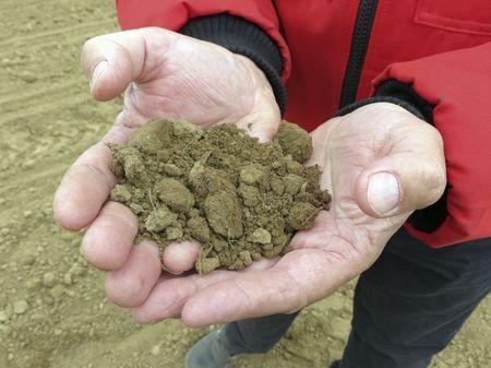 Az aprómorzsás talaj bársonyos, barnás színű