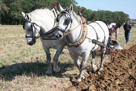 """A hagyományokat ápolni kell – az országos szántóverseny  egyik """"attrakciója"""" a lovasekés szántóverseny"""