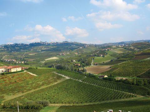 Szőlőültetvények Piemontéban (Barolo)
