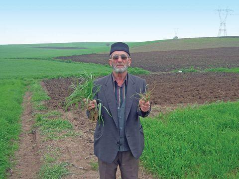 Törők farmer 2