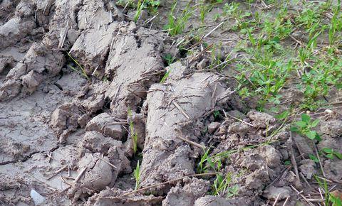Müthing _tomorodott talaj