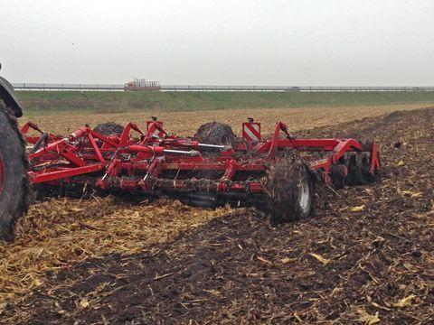 Laphenger munka közben – kukoricatarlón