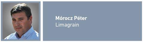 napraforgó_Mórocz_Péter
