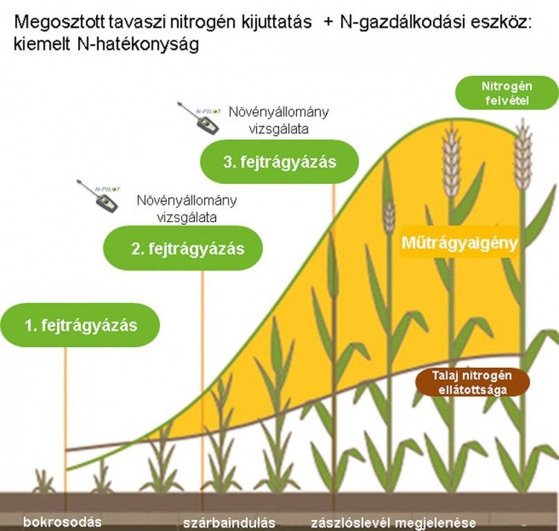 59-borealis-megosztott_tavaszi_nitrogen