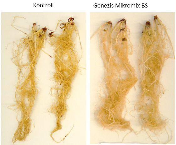 genezis-mikromix-bs