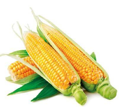 66-dow-kukorica
