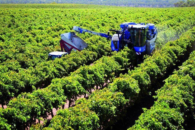 grape_harvester_performance_test_2018_018-k