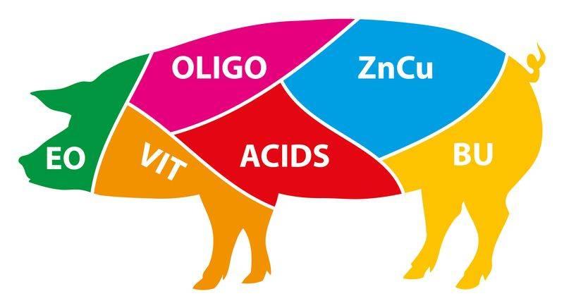 hatagro-pig