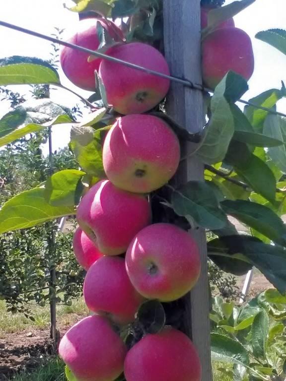 14-holland-alma- ez az allegro!