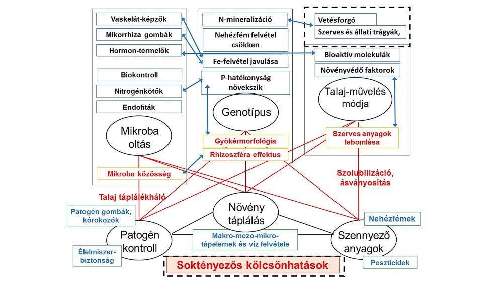 71-talajegyetem-multifaktoriális kölcsönhatások_2-1