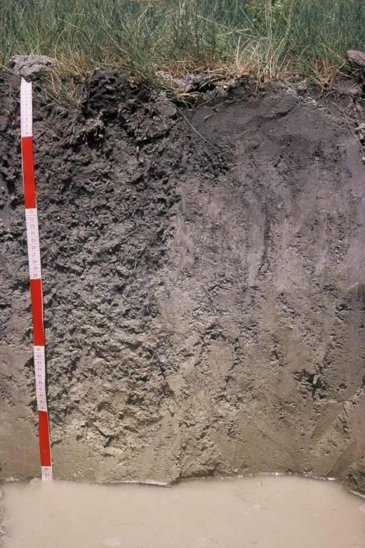 76-augusztus talajegyetem 5_kep