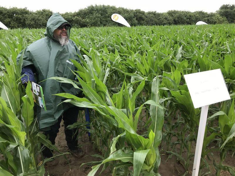 irány a szántóföld kukorica bayer