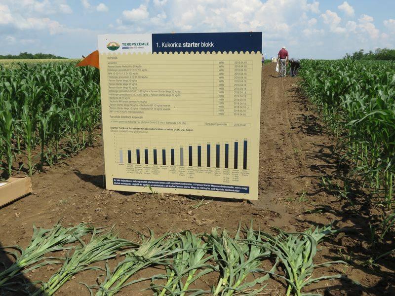 irány a szántóföld kukoricakwizda