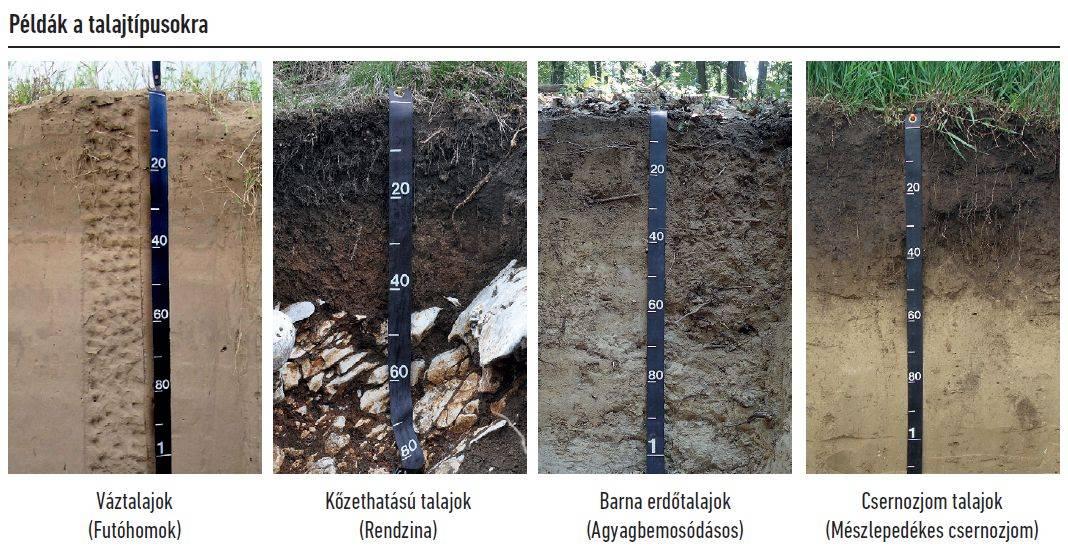 57-talajegyetem-talajtipusok
