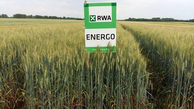 rwa-energo