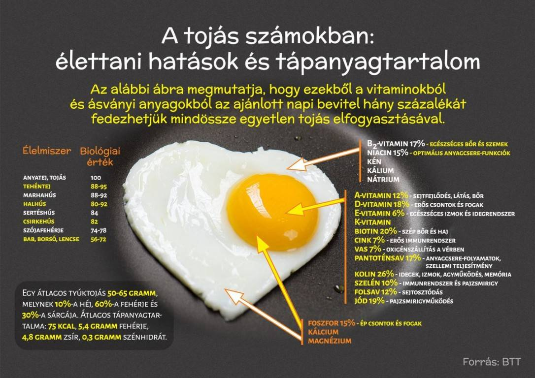 tojas-infografika2-k