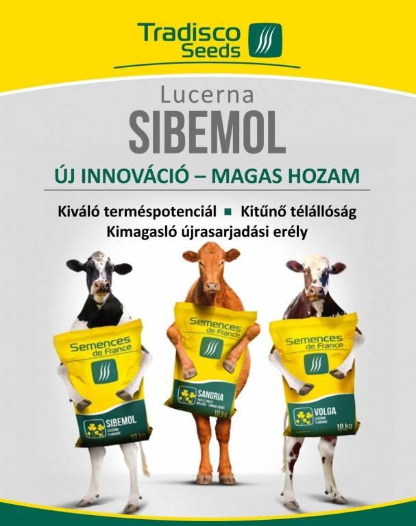 lucerna sibemol_oldal_1