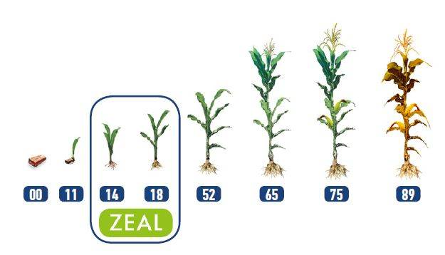 zeal-01