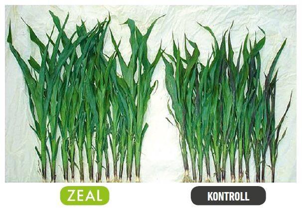 zeal-2