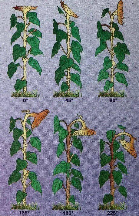 49-napraforgo-tanyerallasok