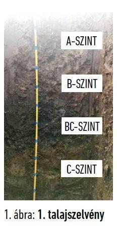 talajegyetem-xv-talajszelveny