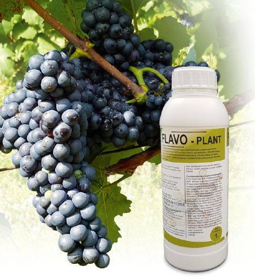 flavo-plant