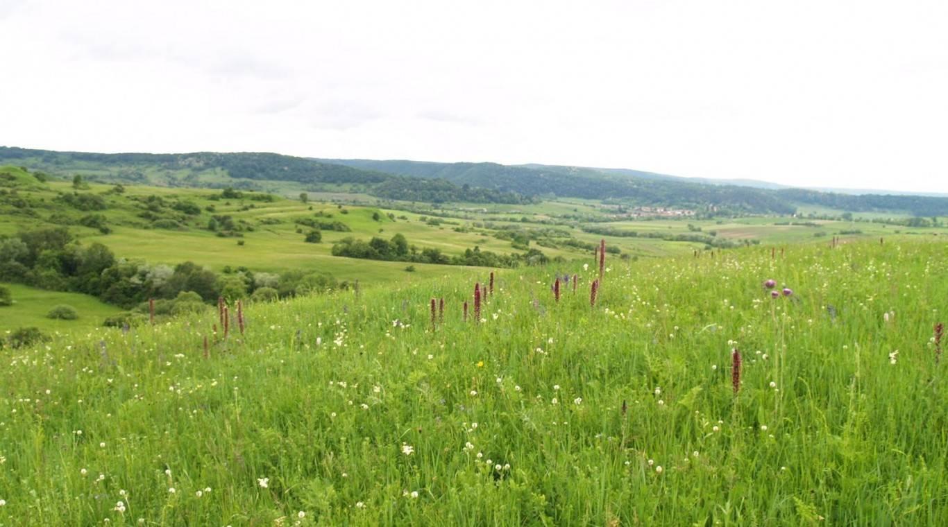 gyep-grassland