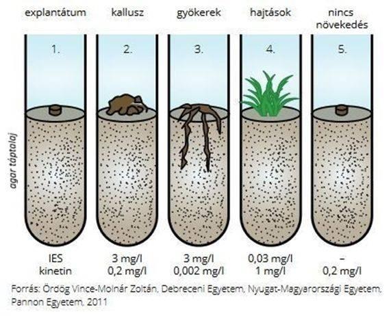 agrobio-alga-kep-2