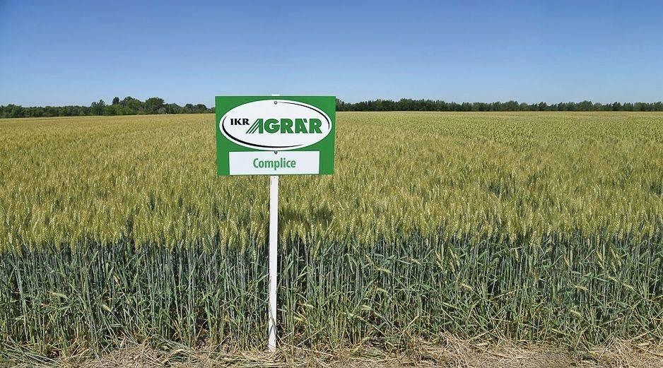 ikr-agrar-complice-3228