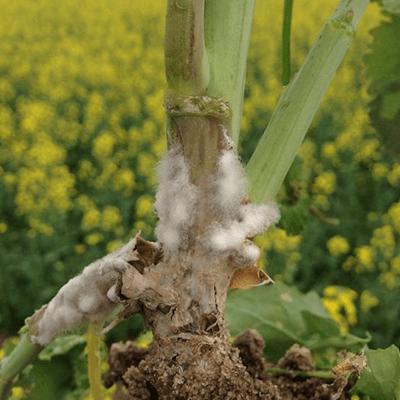 natur-agro-201908-kep_02