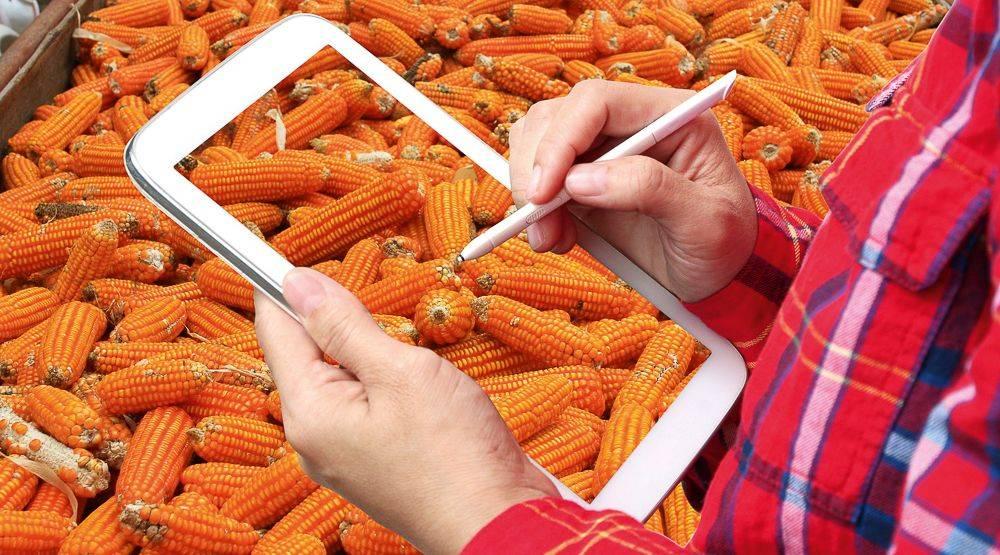 kukorica-tablet-shutterstock_655981669