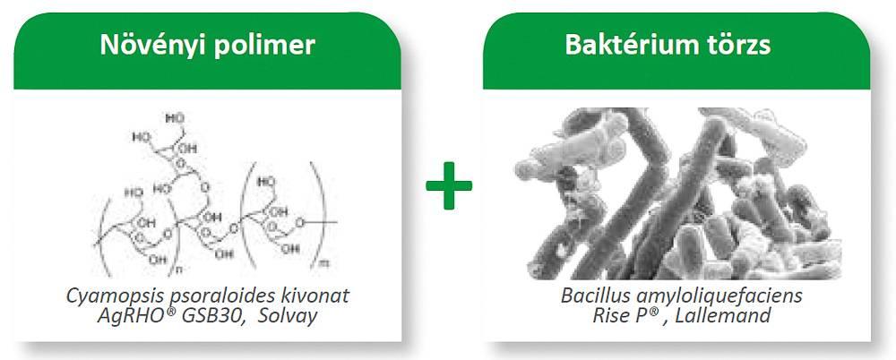 növényi polimer_bacterium