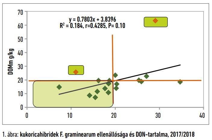 csopeneszgombak-kukoricahibridek-1