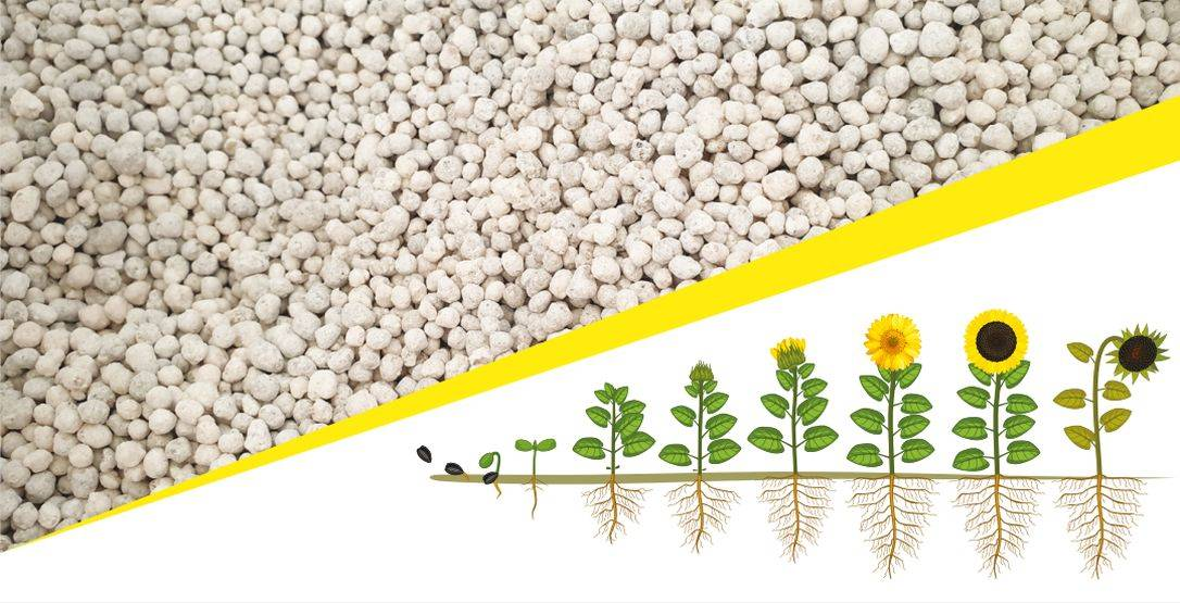 ikr-agrar-202002-6