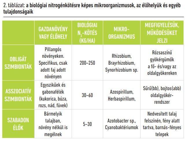 biologiai-nitrogenkotesre-kepes-mikroorganizmusok