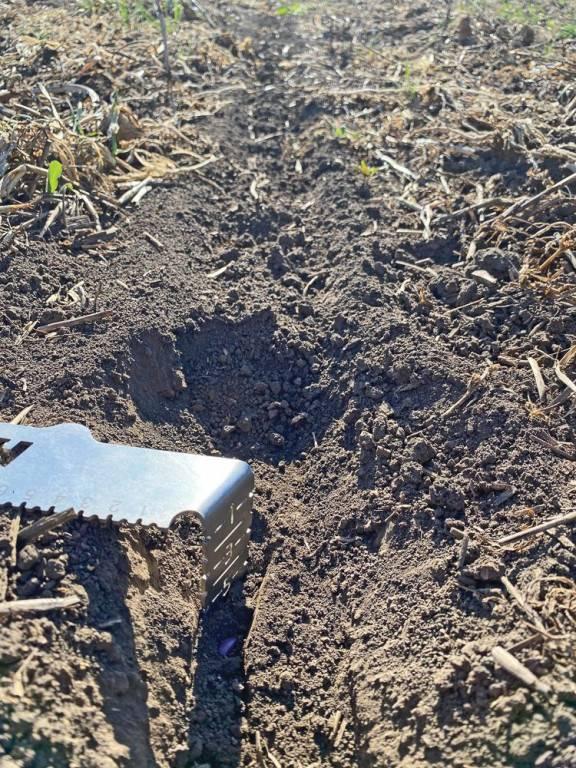 horsch-kép4_notill - napraforgó mag 5cm mélyen a nedves talaban
