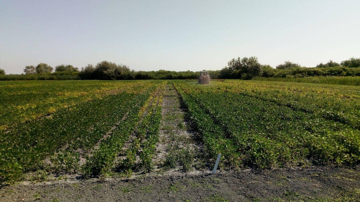 natur-agro-szoja-kiserlet-202005-kép_05