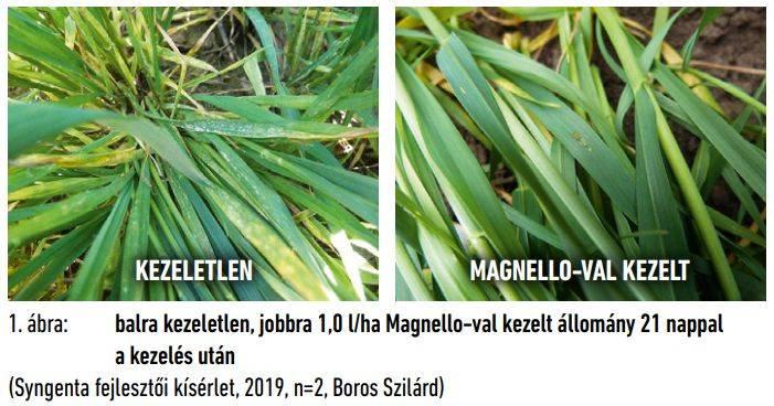 syngenta-magnello-1-abra