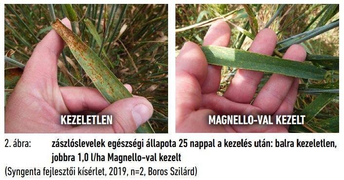 syngenta-magnello-2-abra