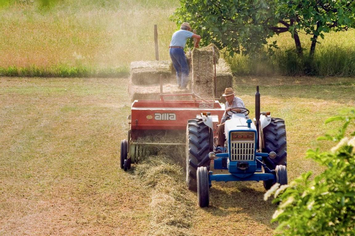agriculture-5157184_1920-k