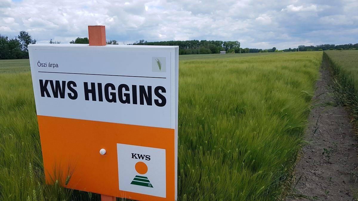 kws-higgins-20200602_114343