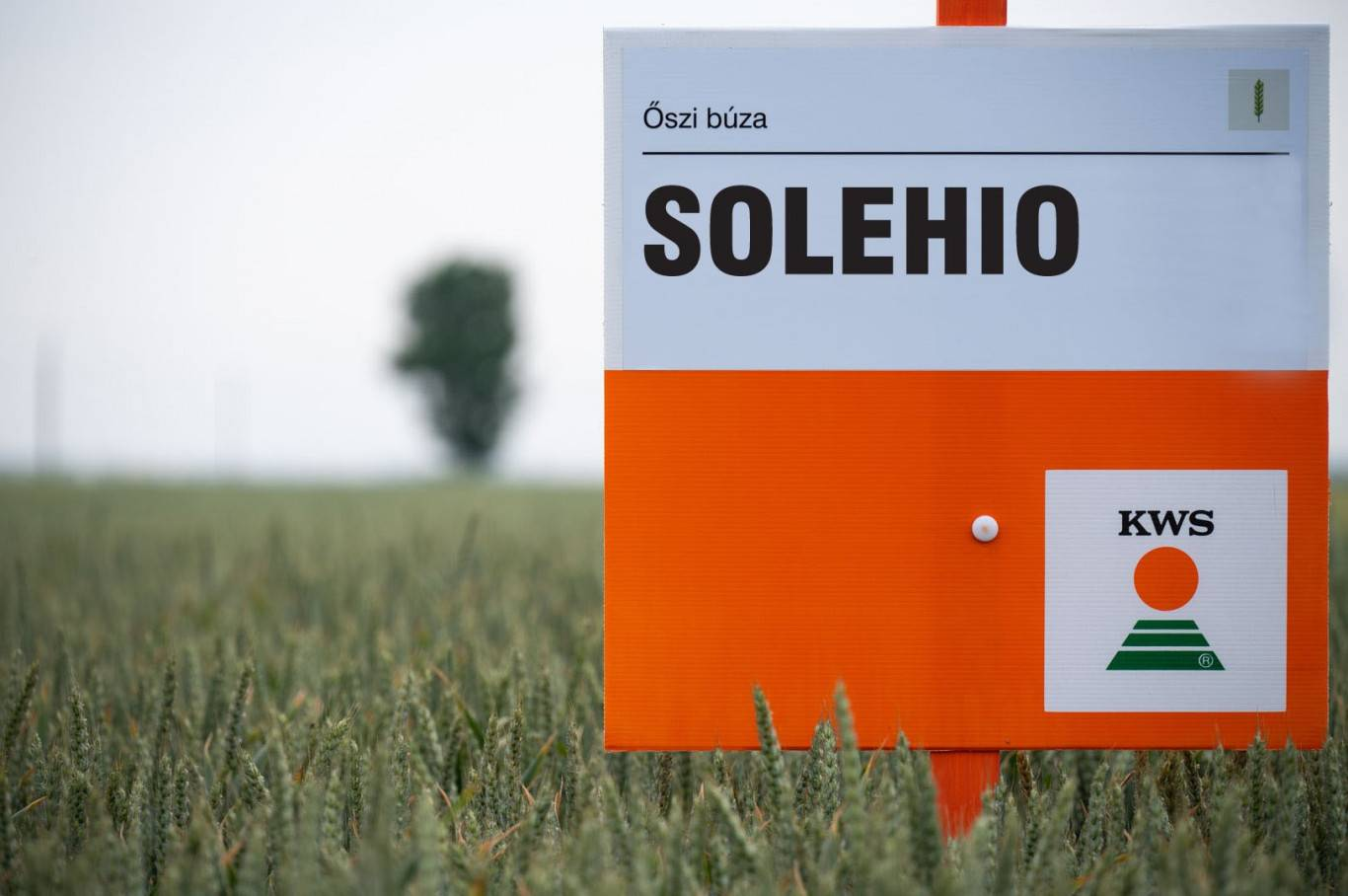 solehio